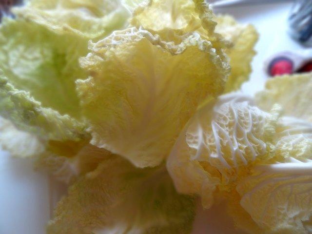 Cavolo verza di Montalto Dora - foglie interne